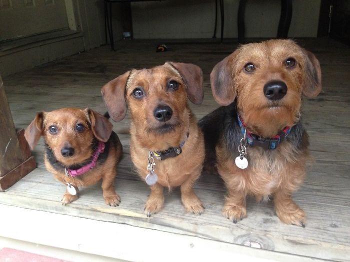 vivir-con-muchos-perros5