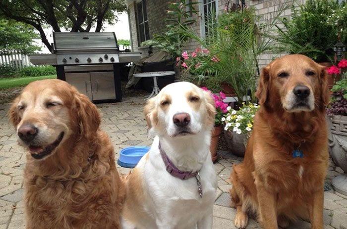 vivir-con-muchos-perros6