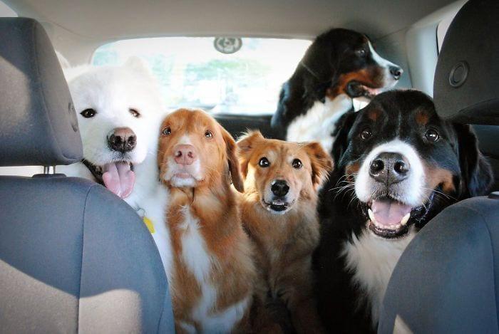 vivir-con-muchos-perros9