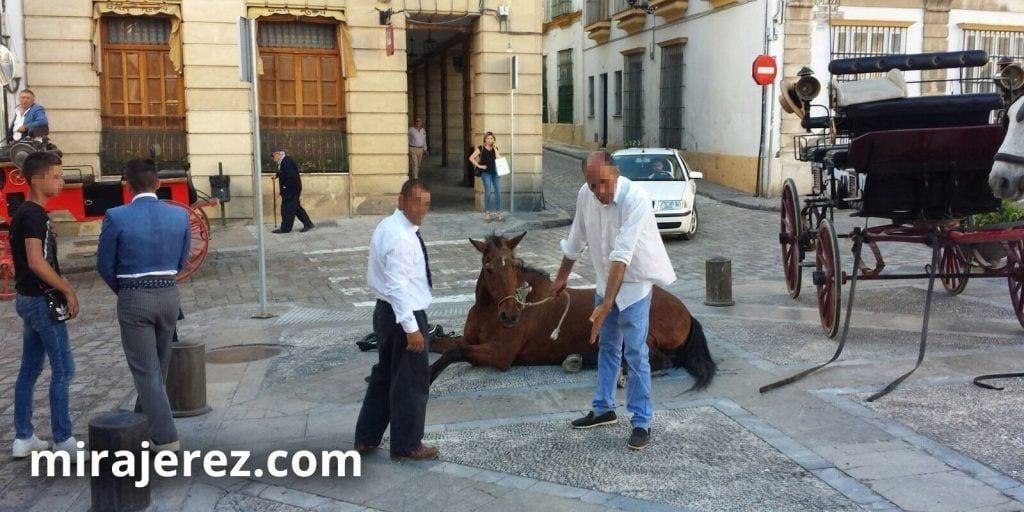 Caballo-desmayado-Jerez-3