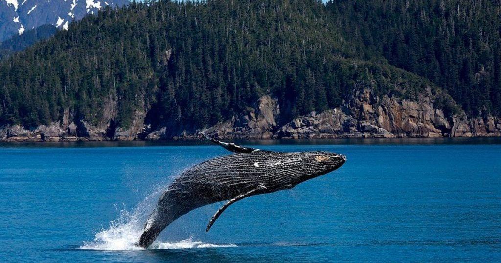 Â¿Sabías por qué las ballenas son tan grandes? Te sorprenderás cuando conozcas la respuesta