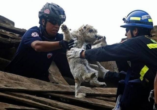 bomberos-rescates8