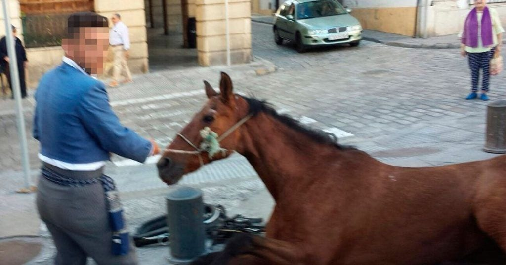 caballo desmayo