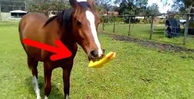 caballo jugando