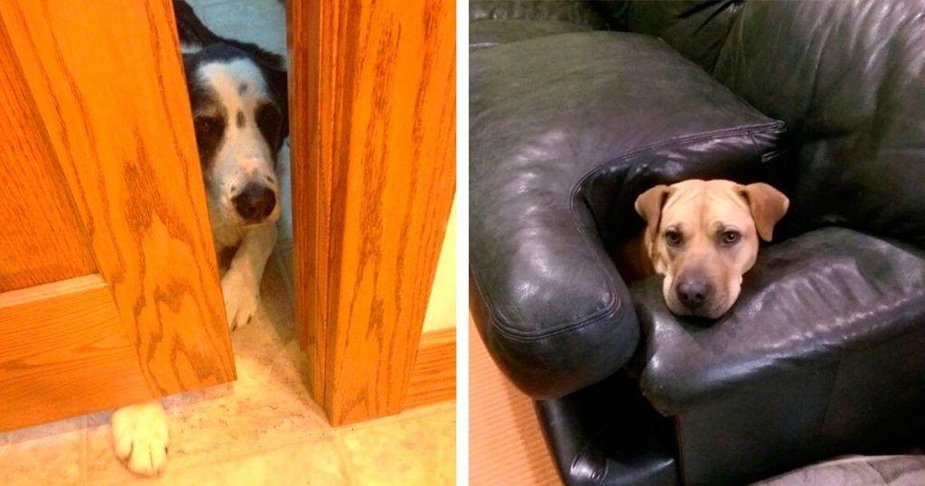 desafio perros destacada