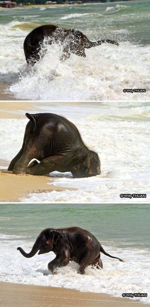 bebés elefantes 05