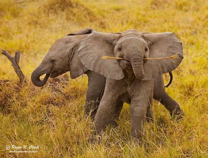 bebés elefantes 14