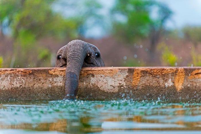 bebés elefantes 07