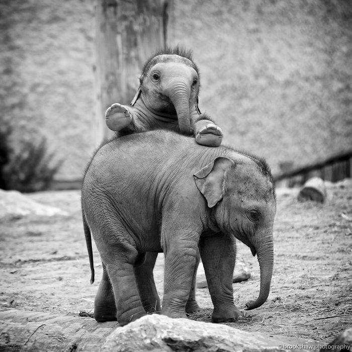 bebés elefantes 09