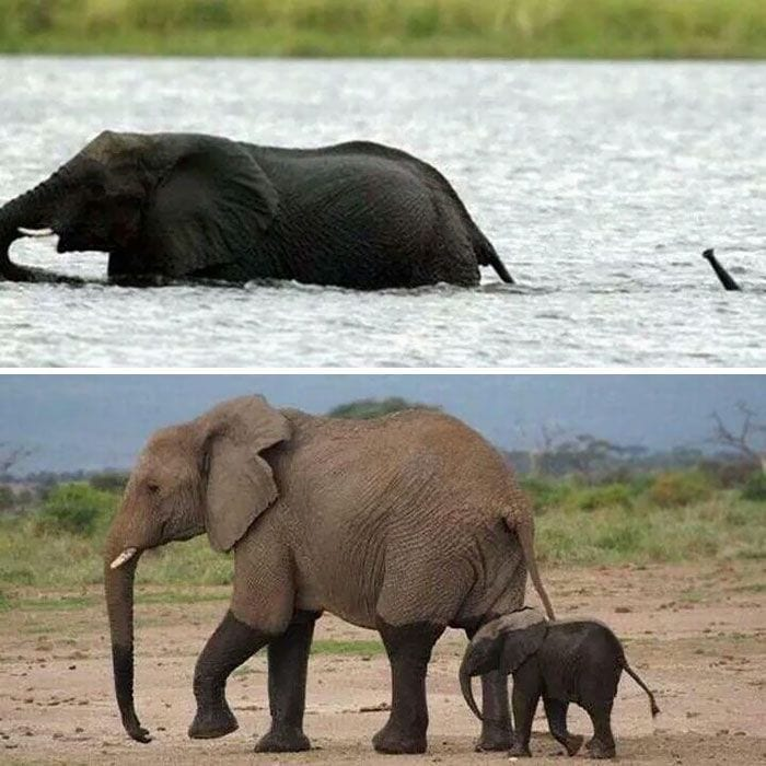 bebés elefantes 01