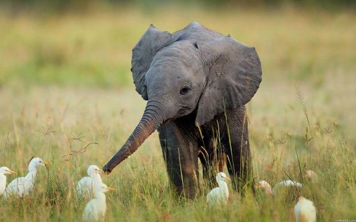 bebés elefantes 02