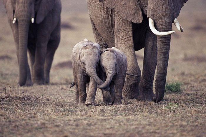 bebés elefantes 03