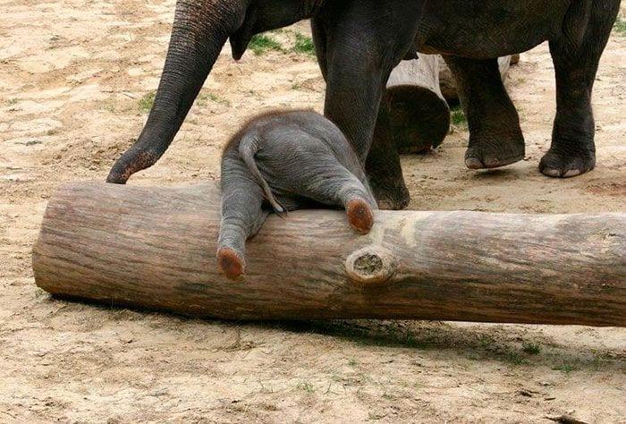bebés elefantes 04
