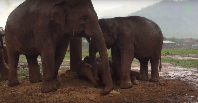 elefantes-dormir-bebe
