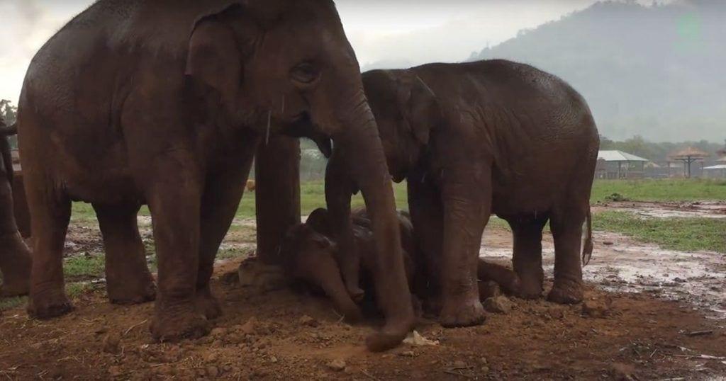 Los elefantes vigilan el sueño de sus crías