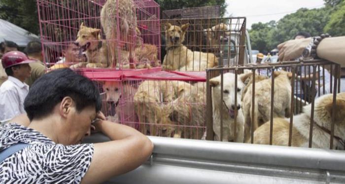 Se consigue prohibir un famoso festival donde se venden perros para su consumo
