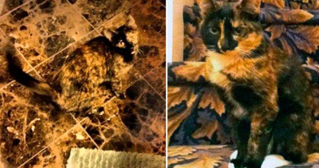 10 gatos muy bien escondidos