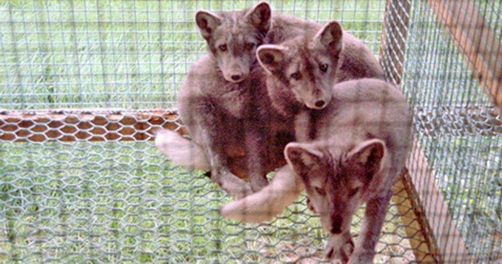 La medida que se acab de aprobar en Alemania puede salvar la vida de muchos animales