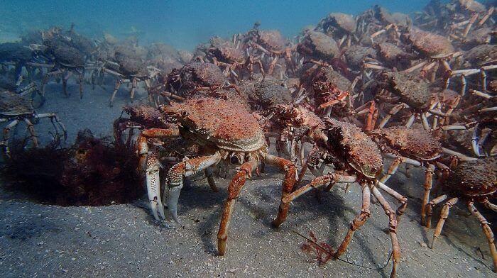 historia terror y cangrejos