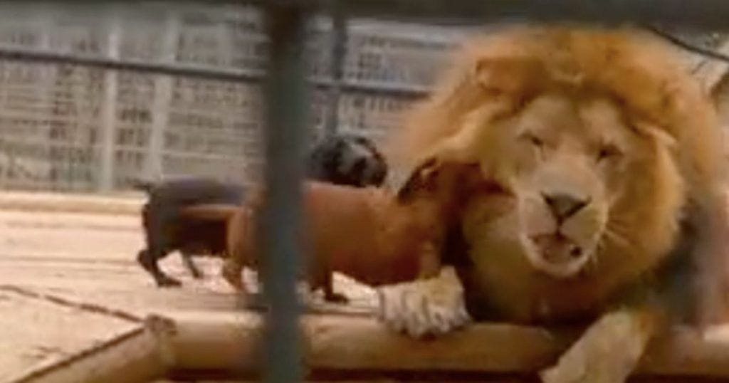 leon perros
