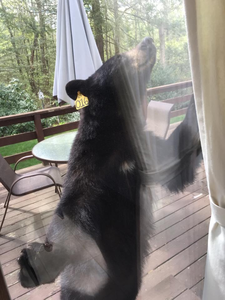 oso-brownie2