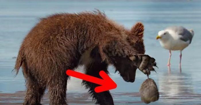 oso y almeja