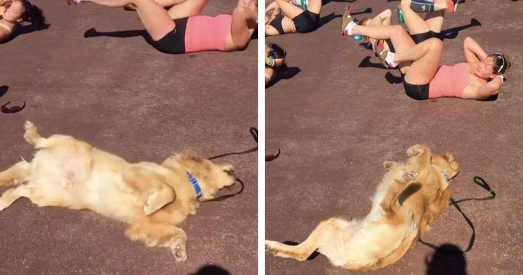 Un perro que hace ejercicio