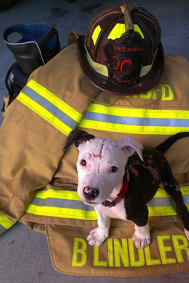 perro-bombero3