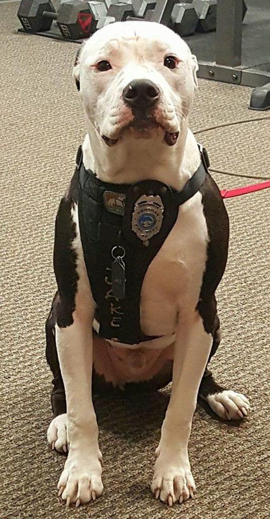 perro-bombero4