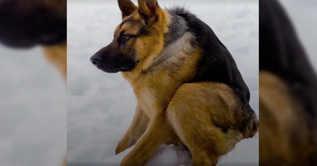 perro-columna