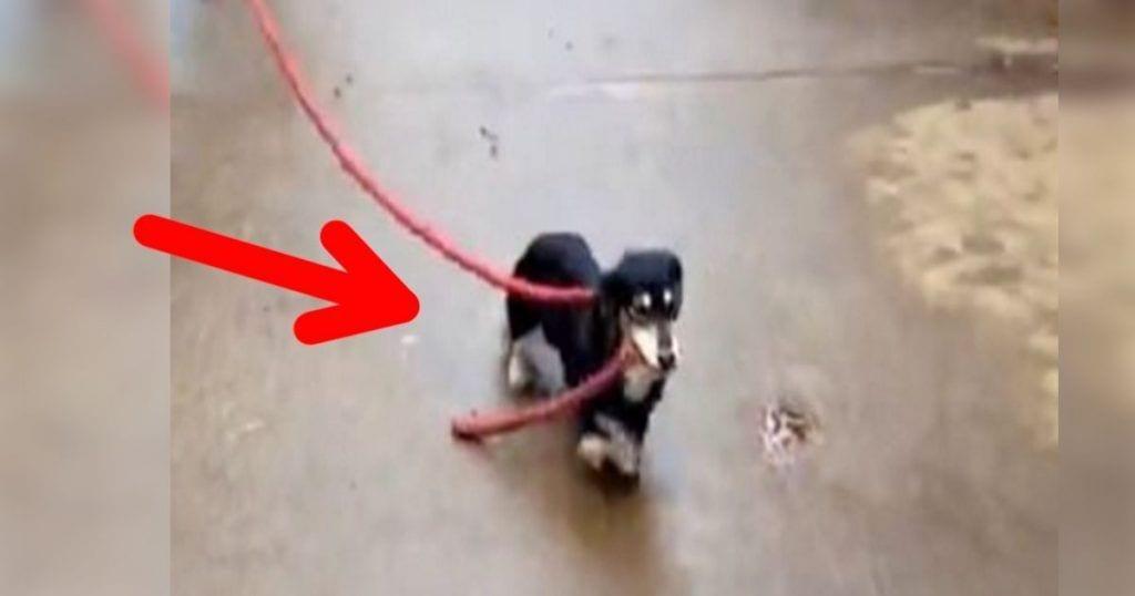 Cuando veas lo que hay detrás de esa cuerda que agarra este perro Â¡no lo podrás creer!
