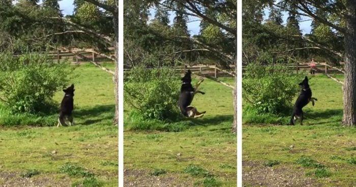 perro palo arbol destacada