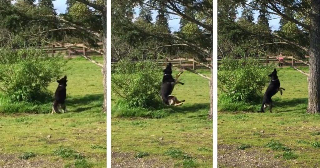 Un perro enamorado de una rama
