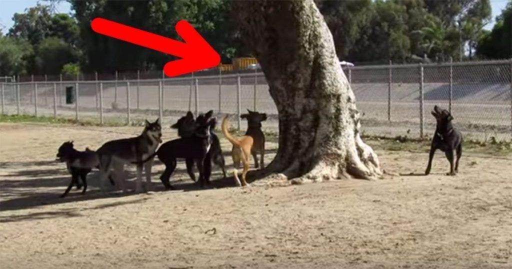 perros ardilla parque