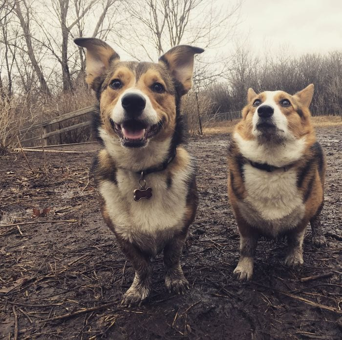 perros-barro10
