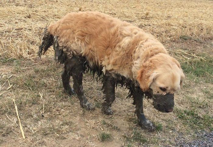 perros-barro6