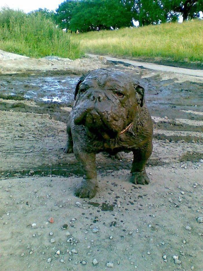 perros-barro7