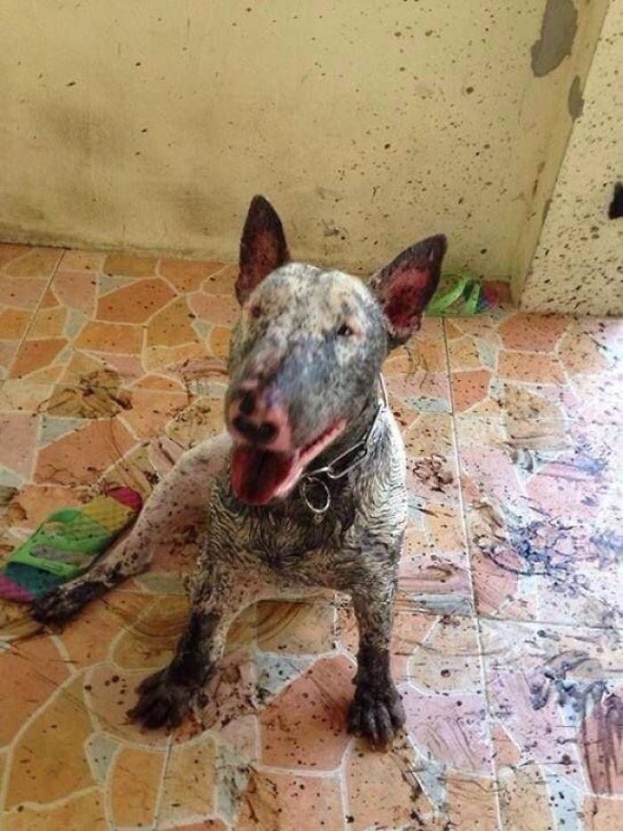 perros-barro8