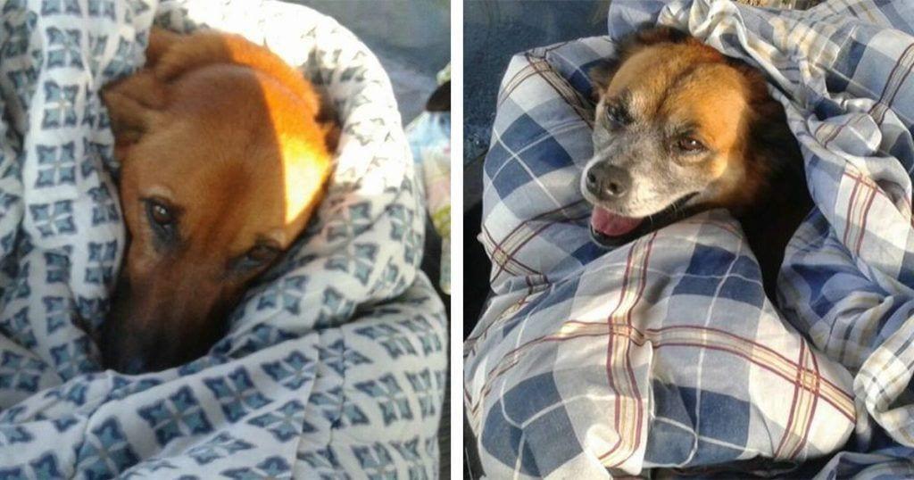 No te imaginas el lugar donde viven ahora estos perros abandonados