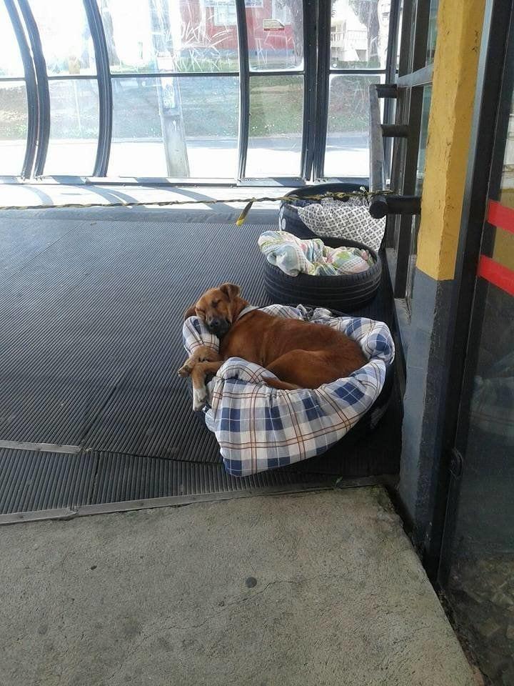 perros-estacion4