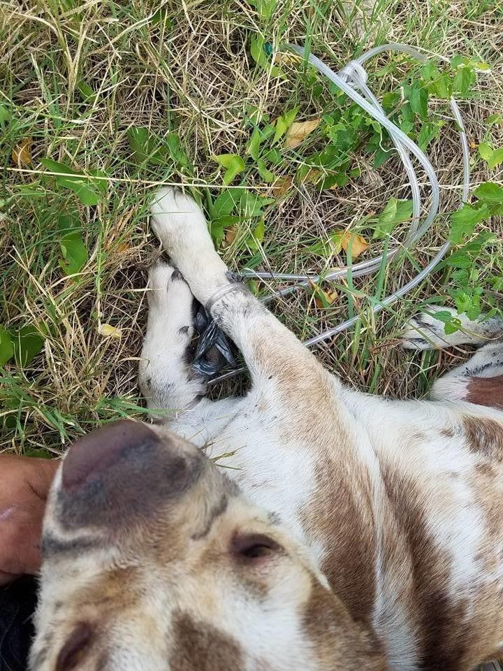 rescate-perro-atado3