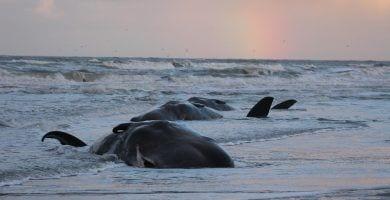 ballenas plastico.destacada
