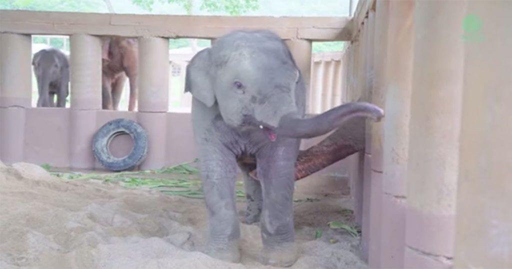 elefantes refugio