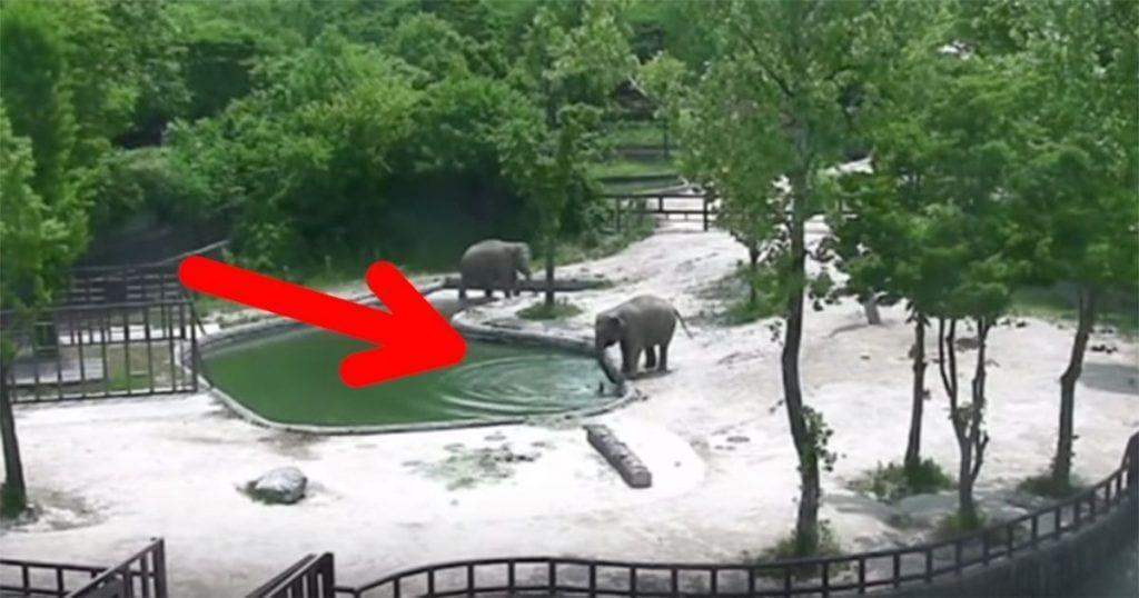 elefantes rescate cria