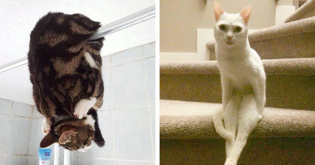 gatos raros