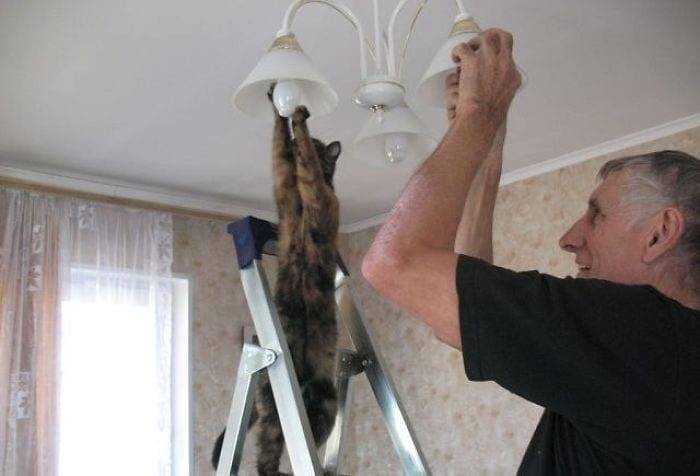 gatos-raros4