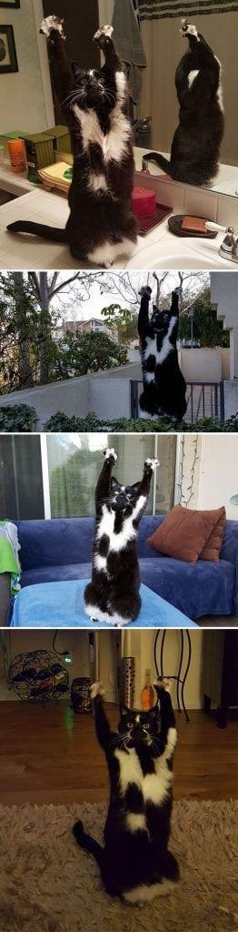 gatos-raros5