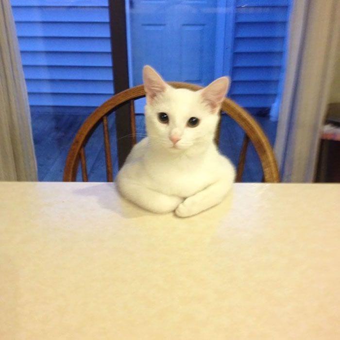 gatos-raros9