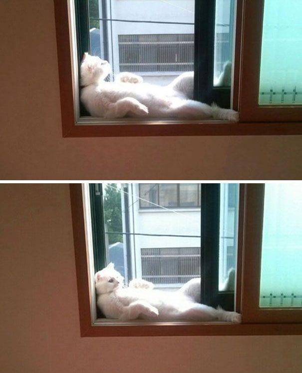 gatos-sol10
