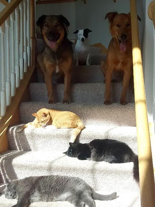 gatos-sol2